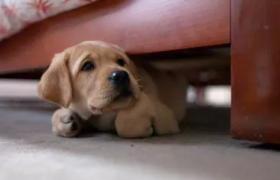 狗狗胆小怎么训练