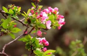 为什么花卉会生蜜虫