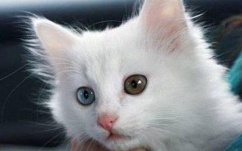 公猫的器官长什么样