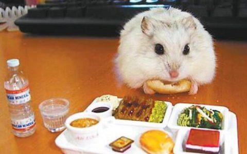 仓鼠吃了同伴还能不能继续养