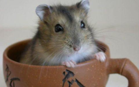 仓鼠喜欢追着手指是什么原因