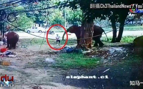游客喂大象时被卷起暴摔 现场图曝光不忍直视