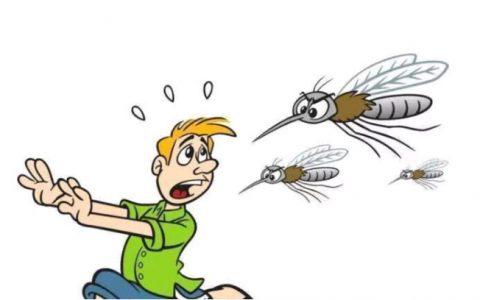 什么血型的人招蚊子咬