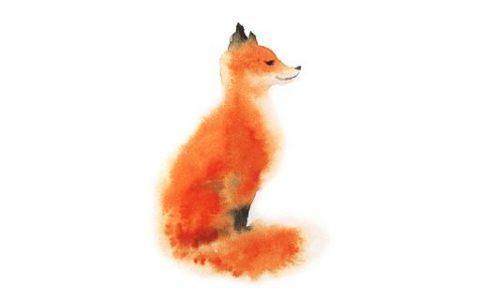 狐狸是犬科吗