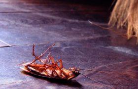厨房有蟑螂是什么原因引起的