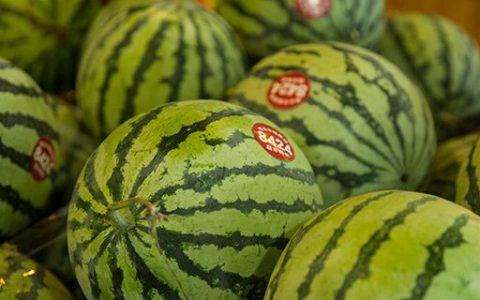 西瓜上市是什么季节