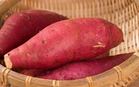 红薯是根繁殖还是茎繁殖