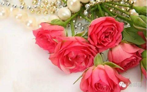 11朵玫瑰代表什么呢(11朵玫瑰花语)